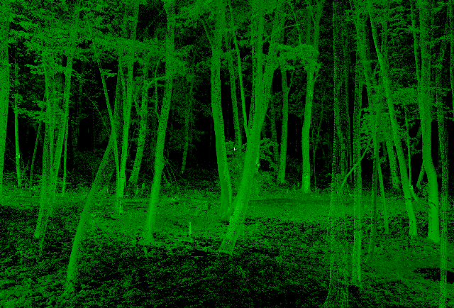 3D- point cloud of a real forest stand. Only the object surfaces were scanned and hence all objects are 'empty'. As points are dimensionless a certain pointsize is chosen for visualization of the data.