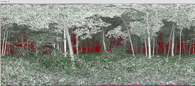 A 2D- image of a scanned forest scene. In real space the left and right image border are directly next to each other.